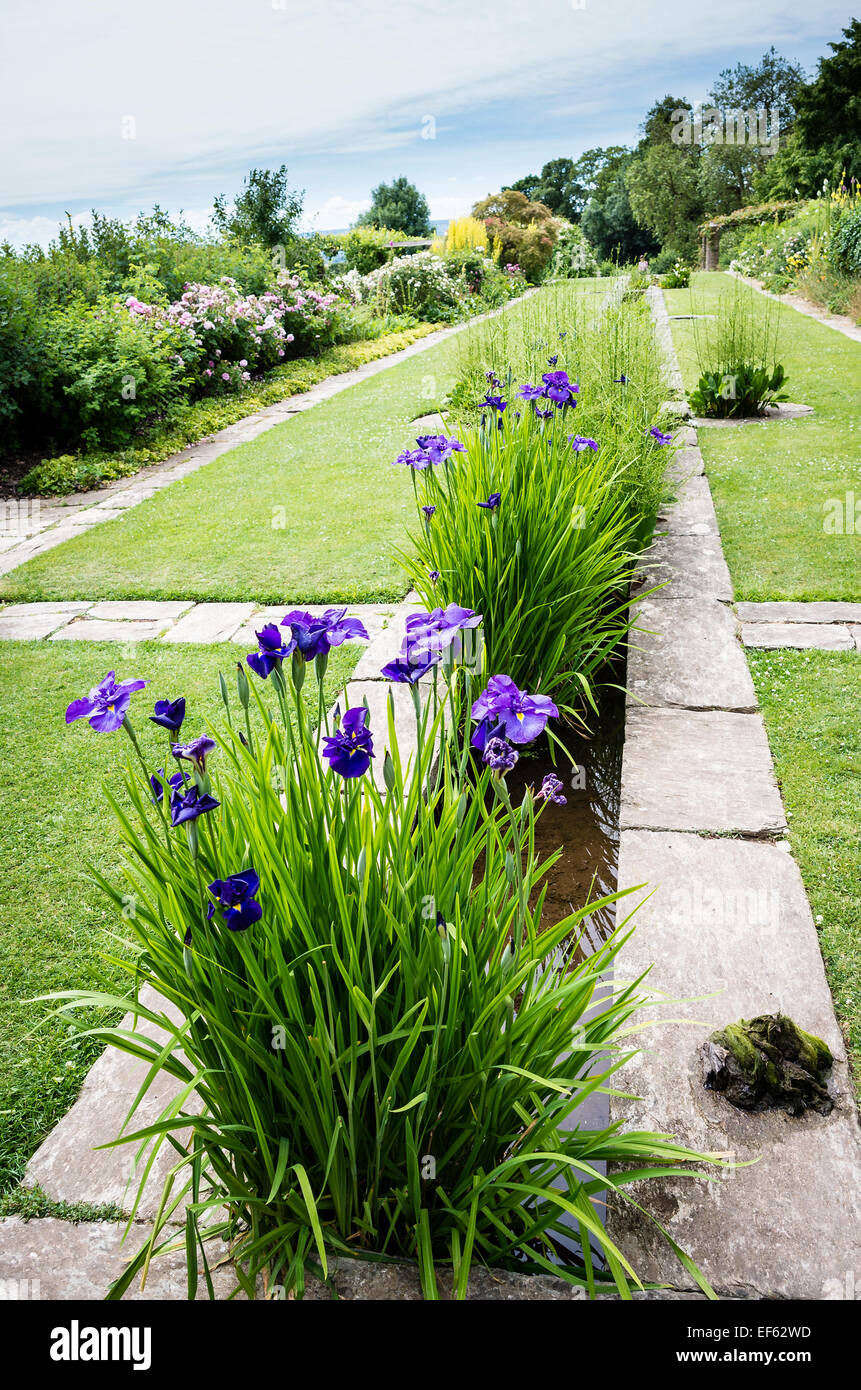 Water Irises In A Rill In A Gertrude Jekyll Garden In Somerset Stock Photo Royalty Free Image