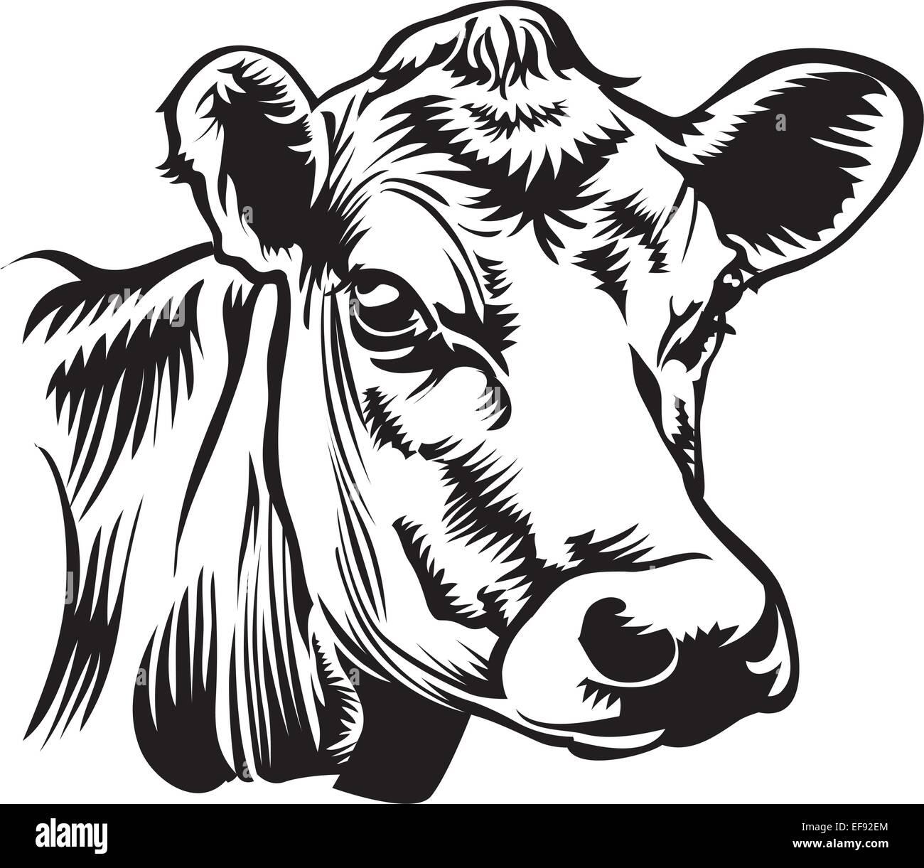 Uncategorized Cow Head Drawing a cows head stock vector art illustration image head