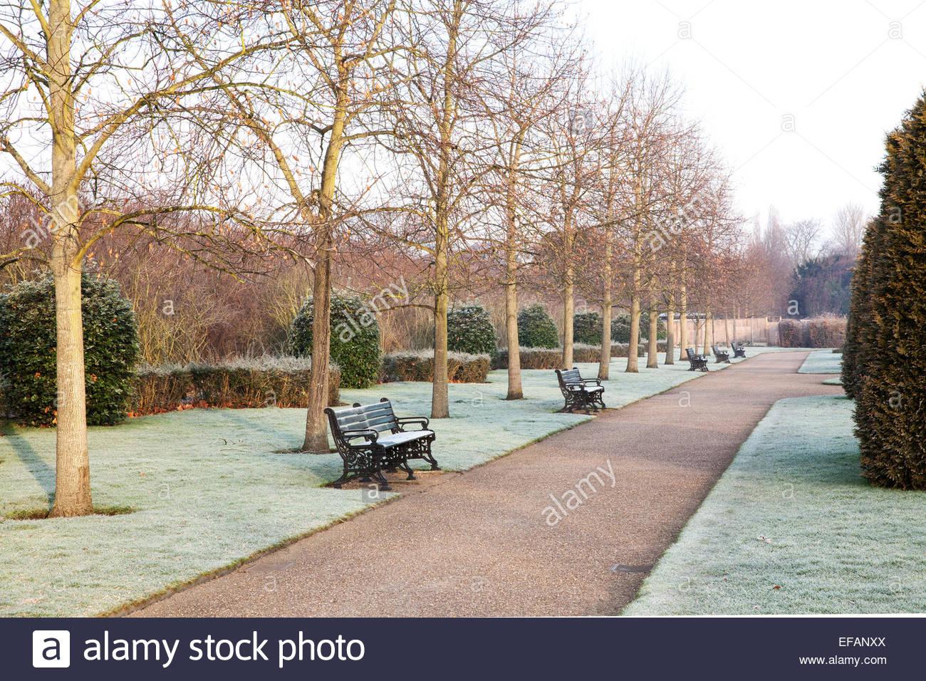 frosty winter morning in regent u0027s park london avenue gardens