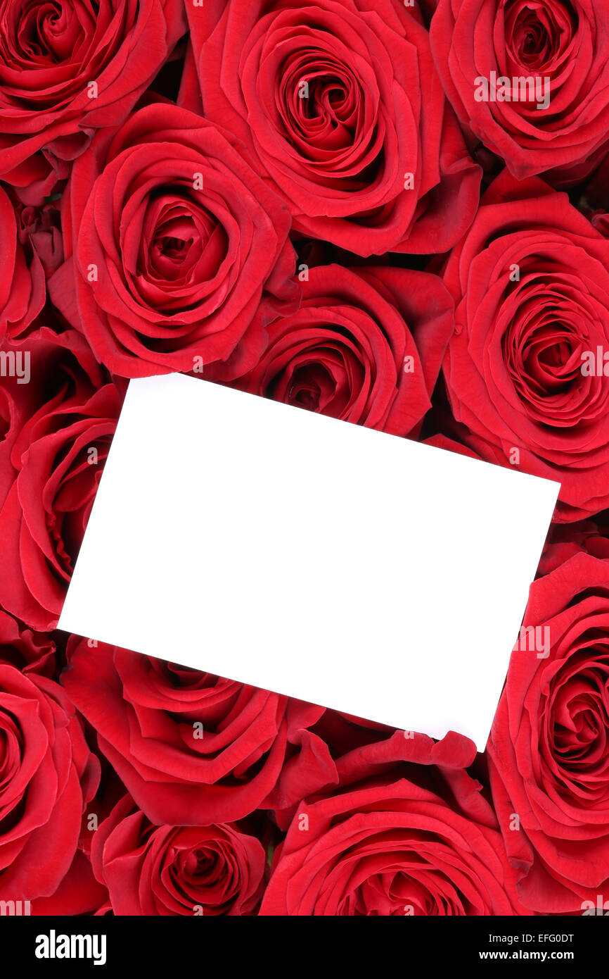 Valentines Day Greeting Card Red Rose Flowers Photos – Flower Valentine Card
