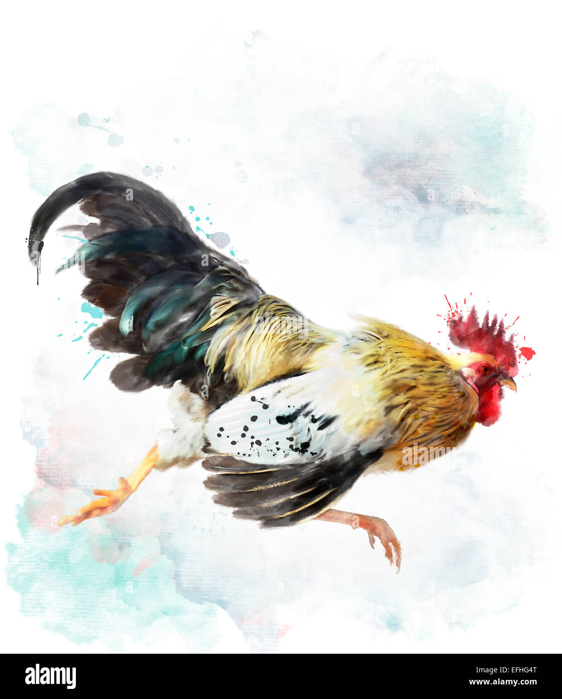 digital watercolor painting of running rooster isolated on white