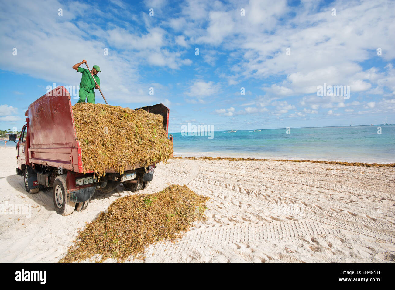 DOMINICAN REPUBLIC. Clearing unsightly Sargassum seaweed from Punta Stock Photo, Royalty Free ...