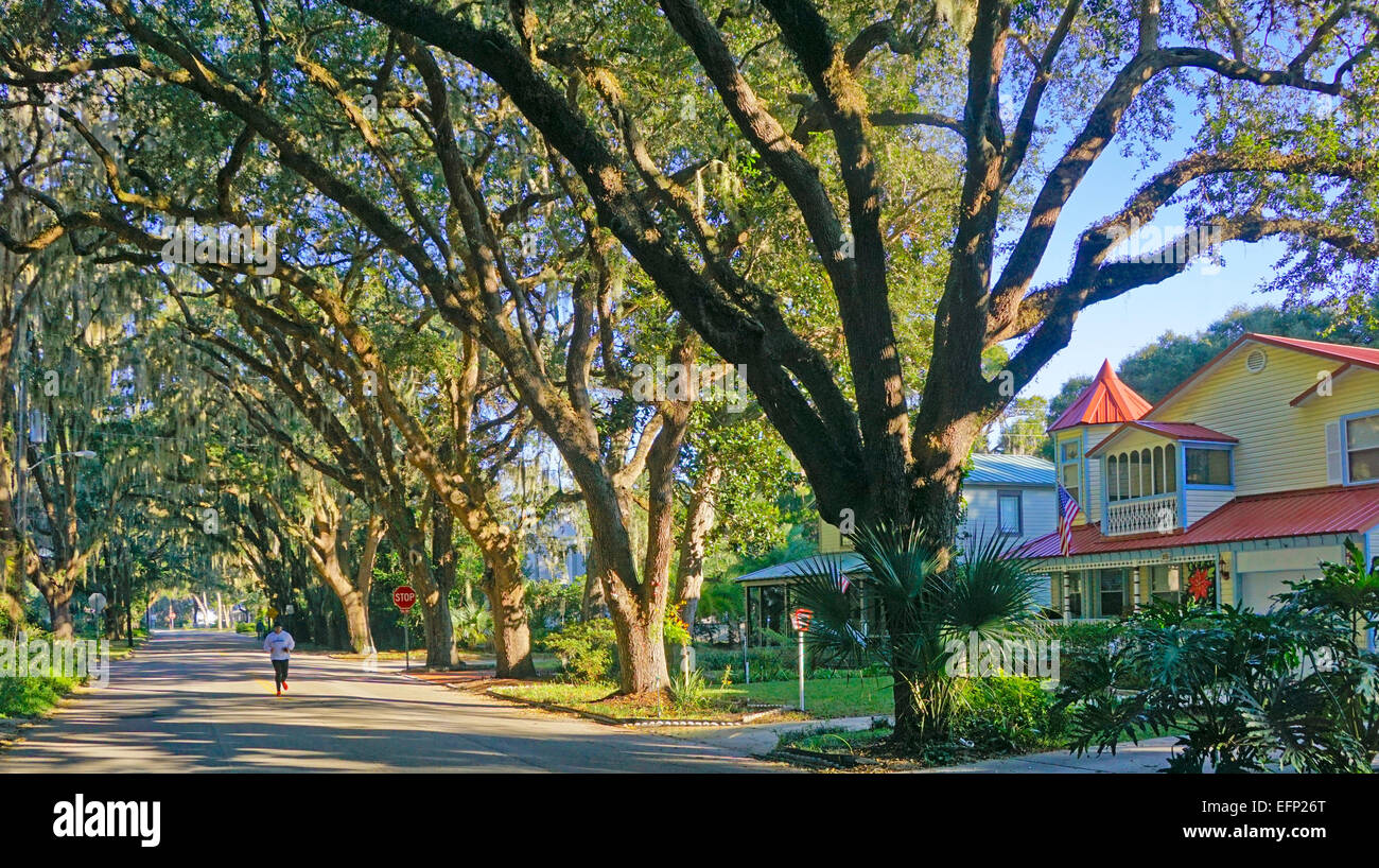 Spanish moss canopy over residential street in St. Augustine Florida & Spanish moss canopy over residential street in St. Augustine Stock ...