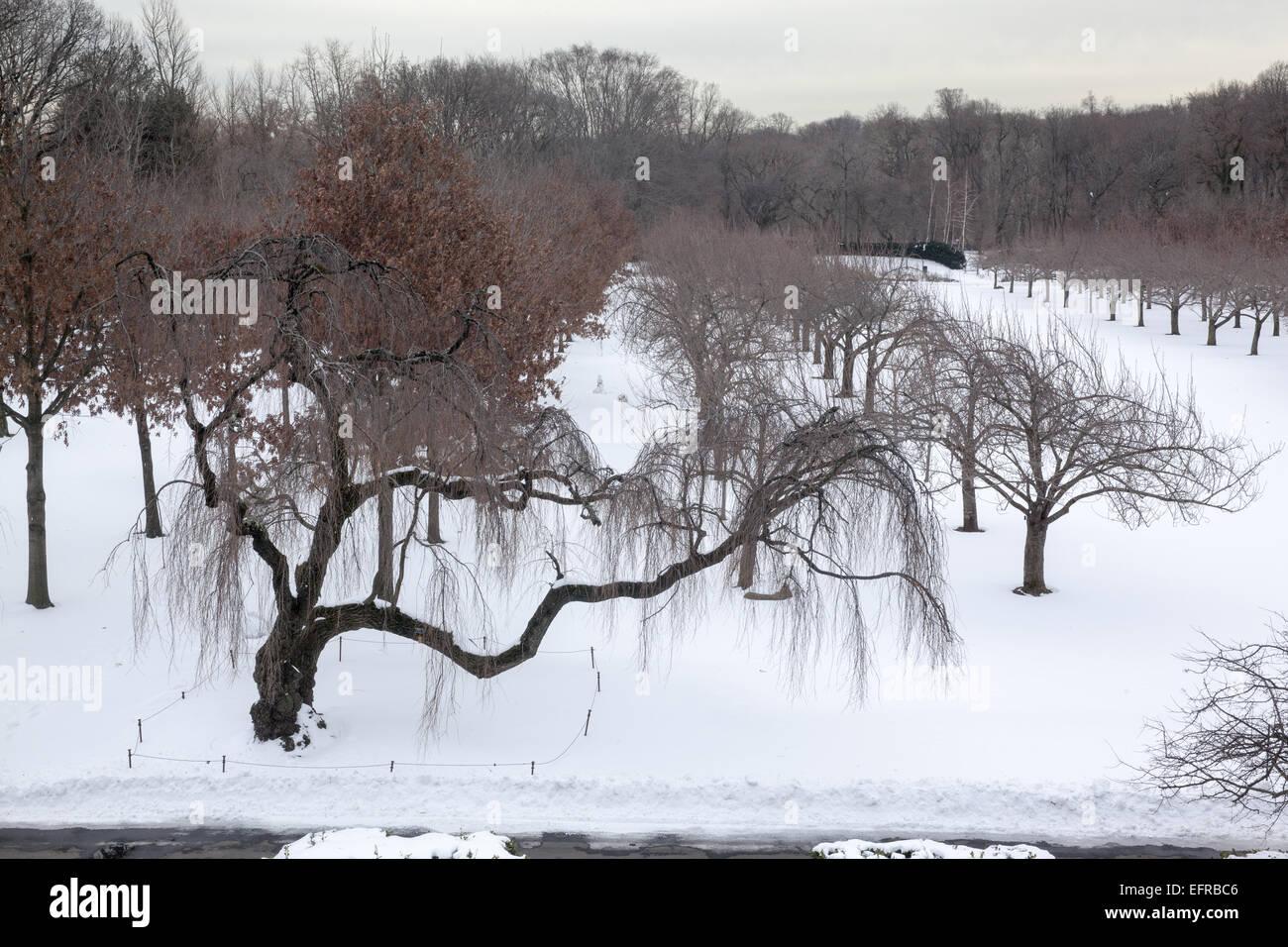 Cherry Esplanade At The Brooklyn Botanic Garden In Winter Brooklyn Stock Photo Royalty Free