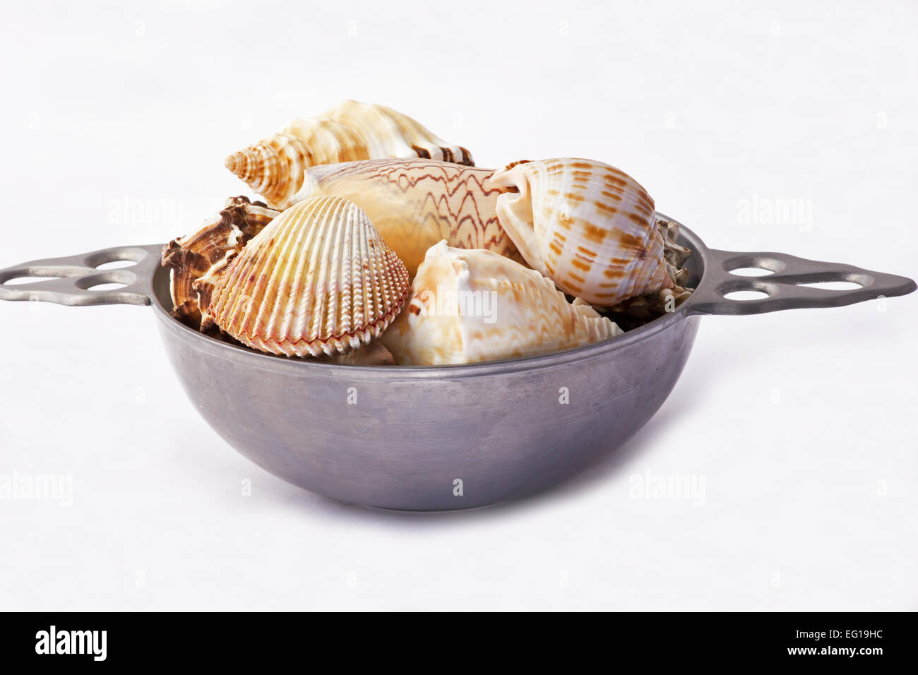 assorted seashells in a putter bowl on white background stock