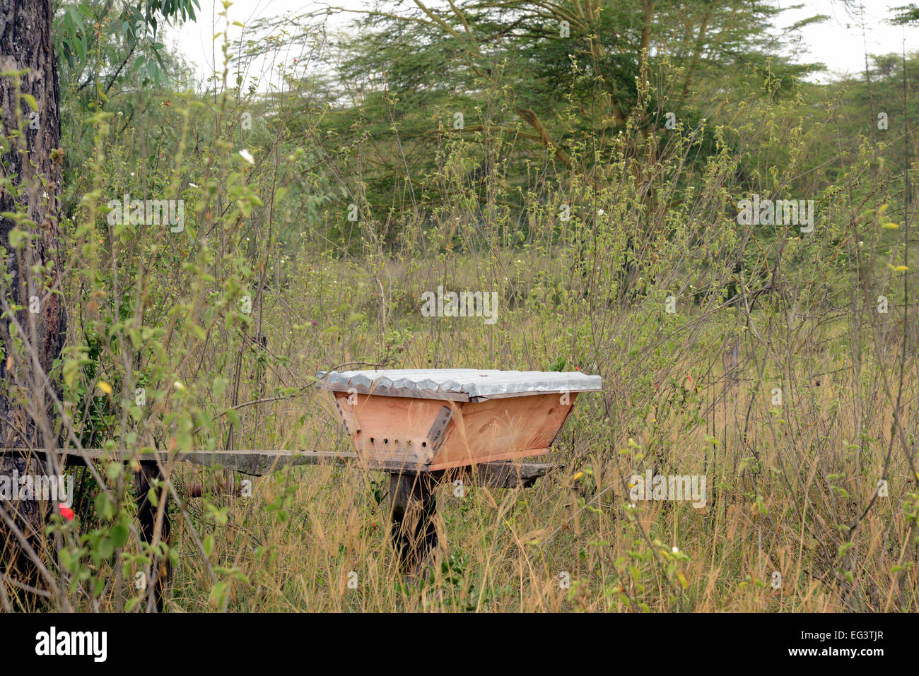 Kenyan Beekeepers Hive Called A Horizontal Top Bar Hive At Soysambu In  Kenya, East Africa