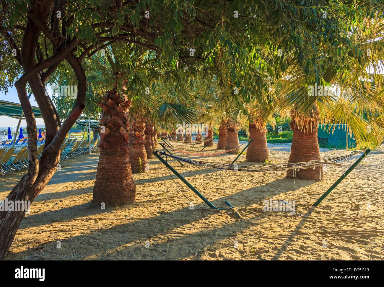Hammocks on the beach - Palm Trees And Hammocks On The Beach