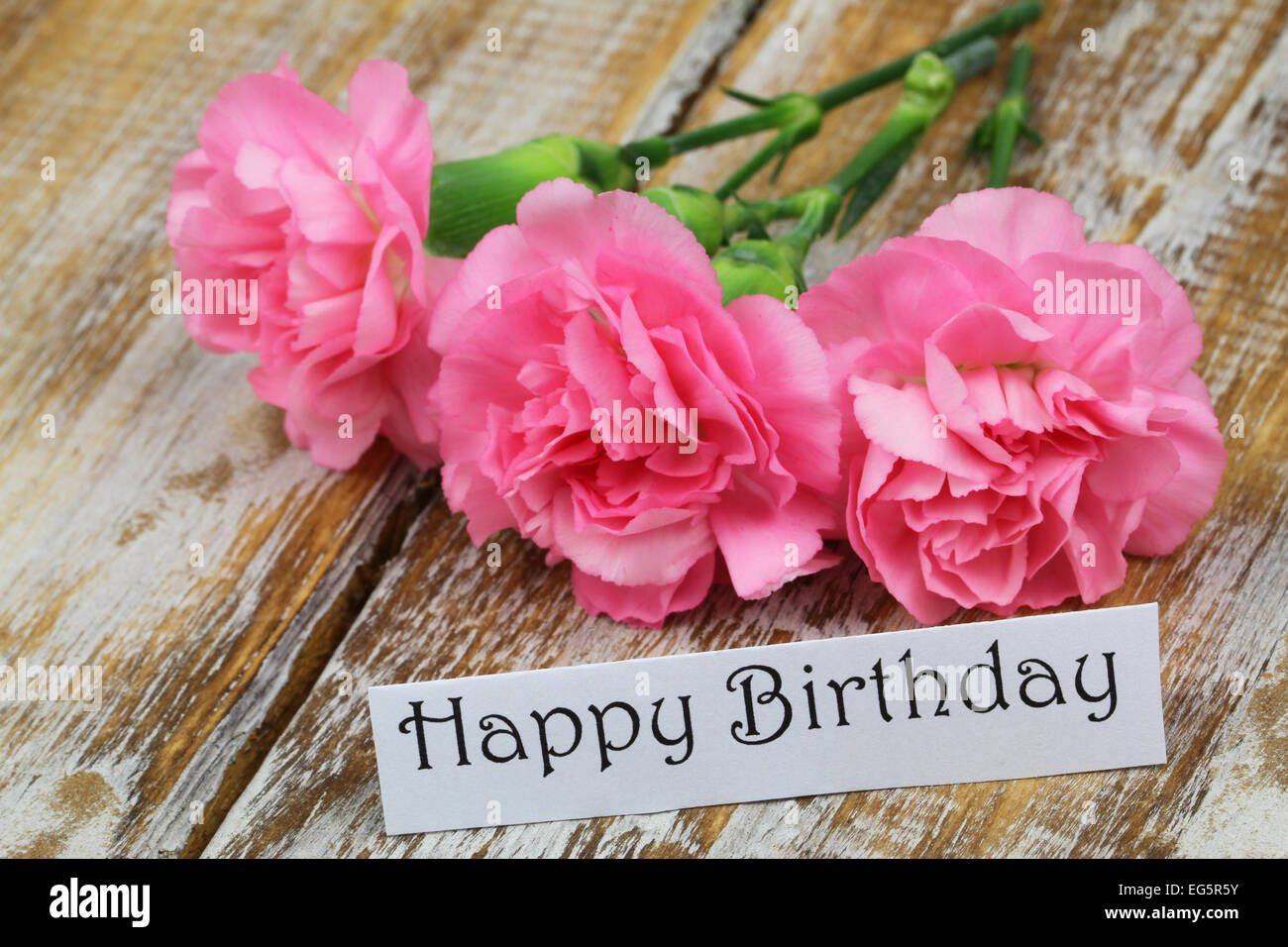 happy birthday card with pink carnation flowers stock photo, Birthday card