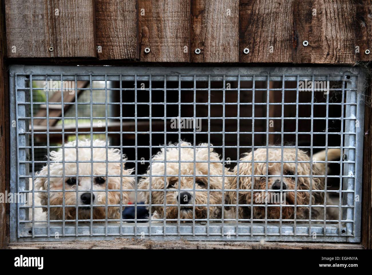 Many Tears Animal Rescue Centre Stock s & Many Tears Animal
