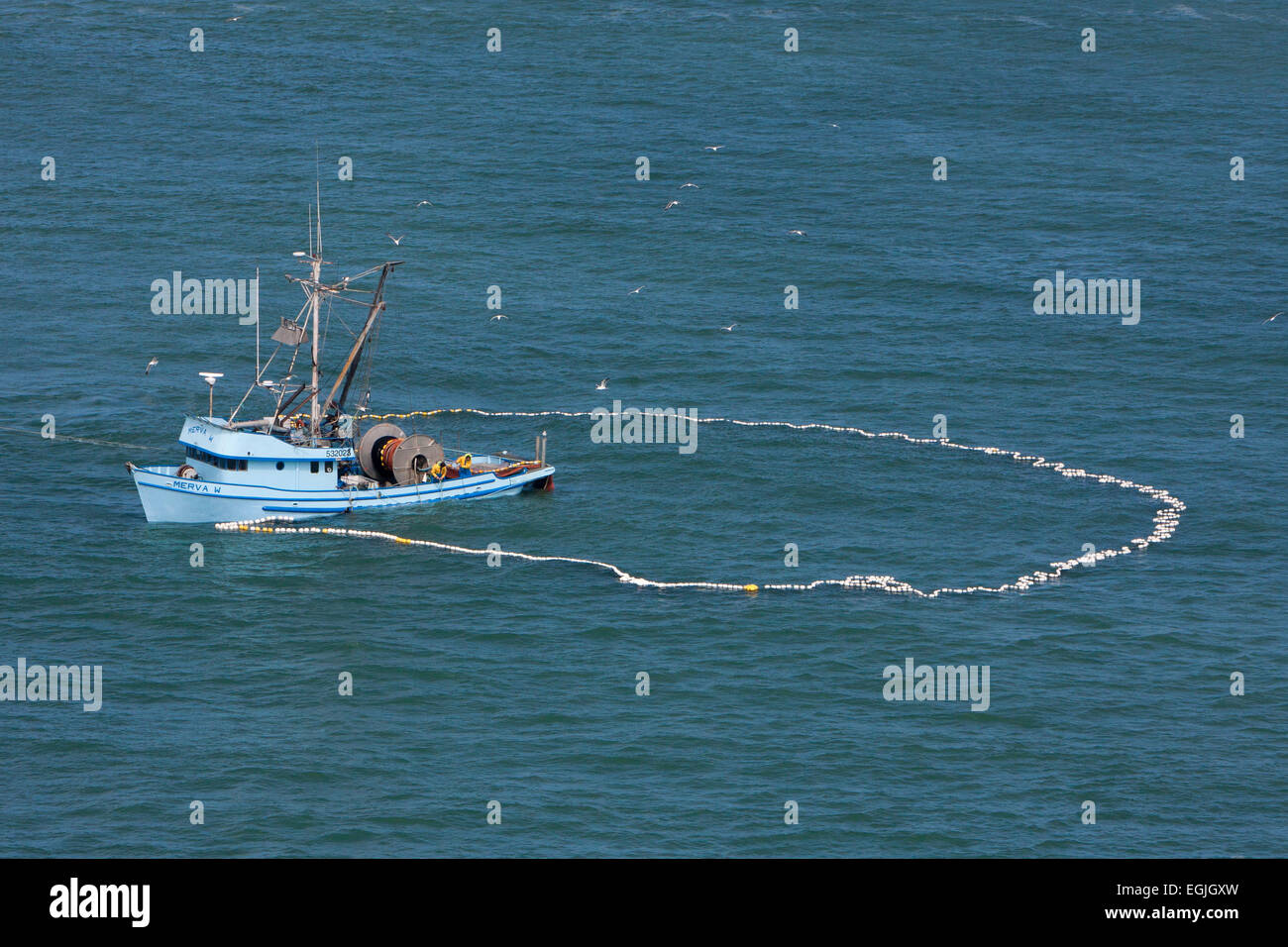 Anchovy fishing with net purse seine in a circle from for Seine net fishing