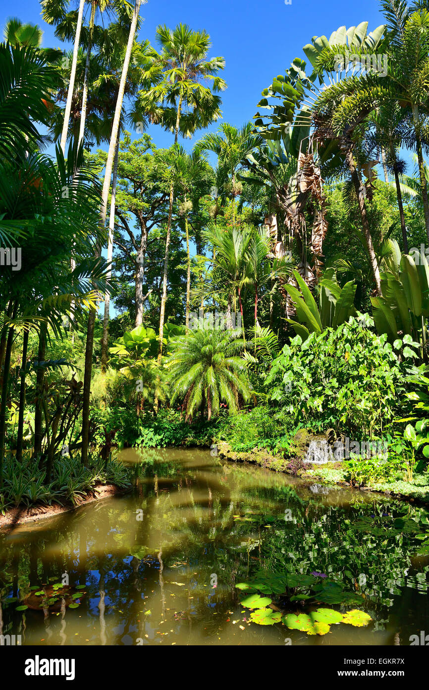 Lily lake in hawaii tropical botanical garden on onomea for Hilo botanical gardens