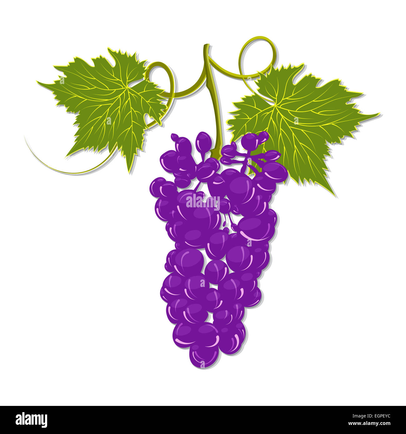 Handdrawing A Bunch Of Grapes With Leaves On A White Background  Stock  Image