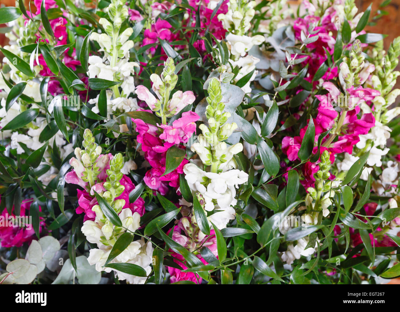 Big Multicolor White Pink Red Wonderful Summer Lupine Flowers