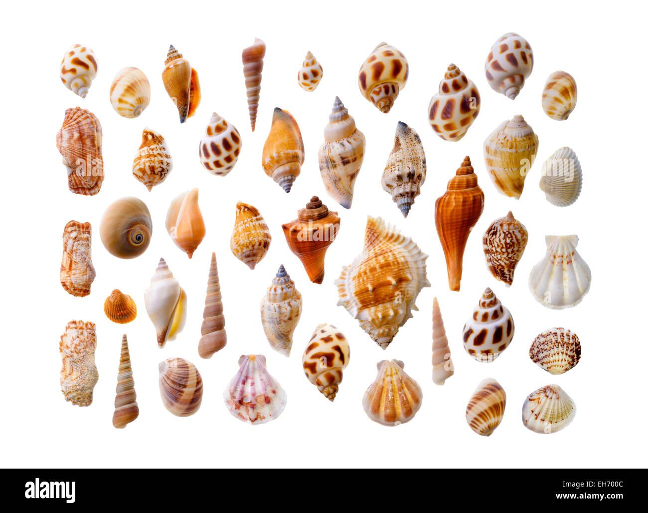 isolated objects assorted seashells isolated on white background
