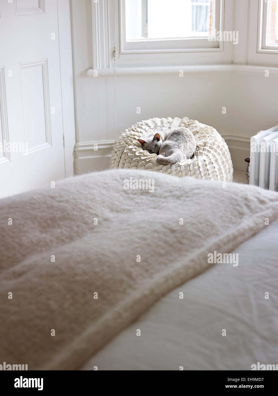 Bed in bay window - Sleeping Cat Next To Bed By Bay Window Residential House Port Hall Street Brighton East Sussex Uk