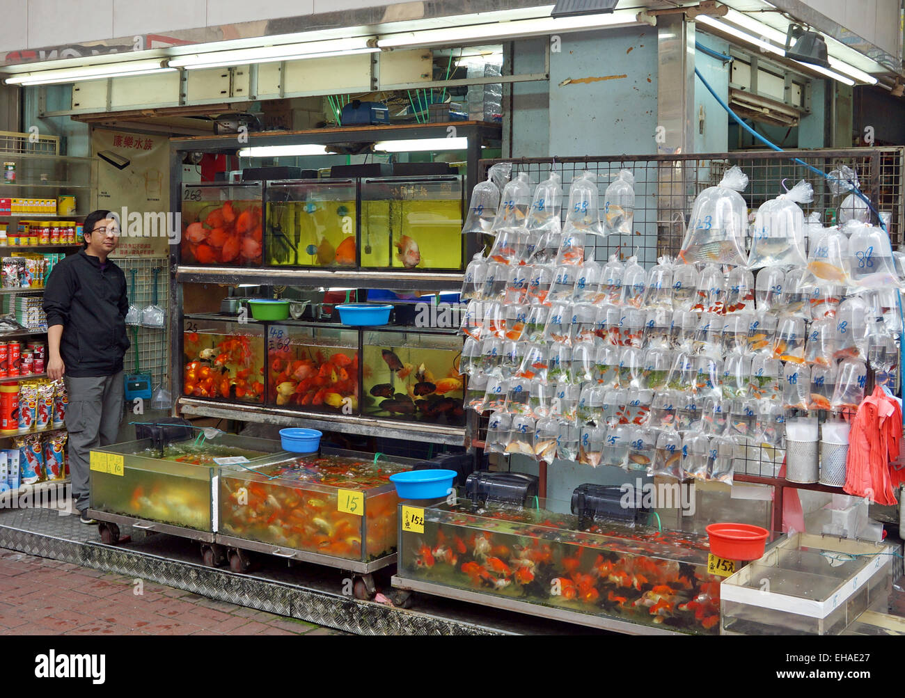 Pet shop in hong kong selling gold fish and other for Fish pet shop