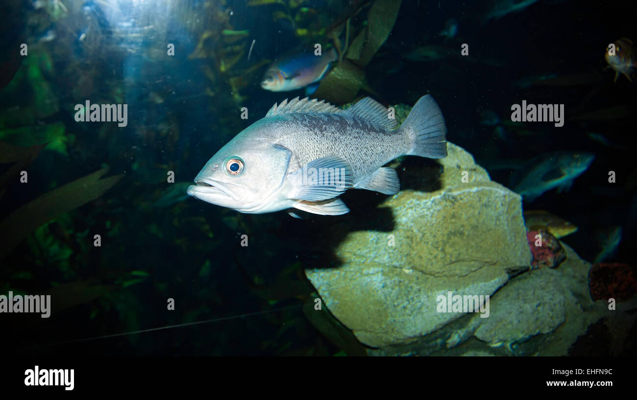 Fish in ripleys aquarium - Ripleys Aquarium In Toronto Ontario Canada Tourist Attraction Near The Cn Tower