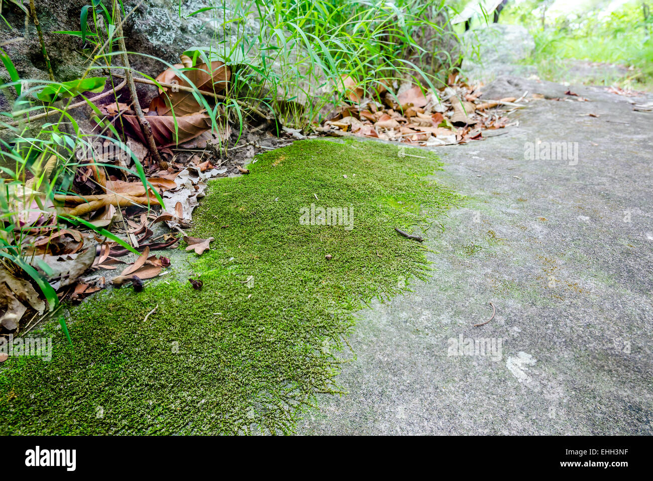 Moss Mats Moss Small Flowerless Plant That Usually Grow In Dense Green