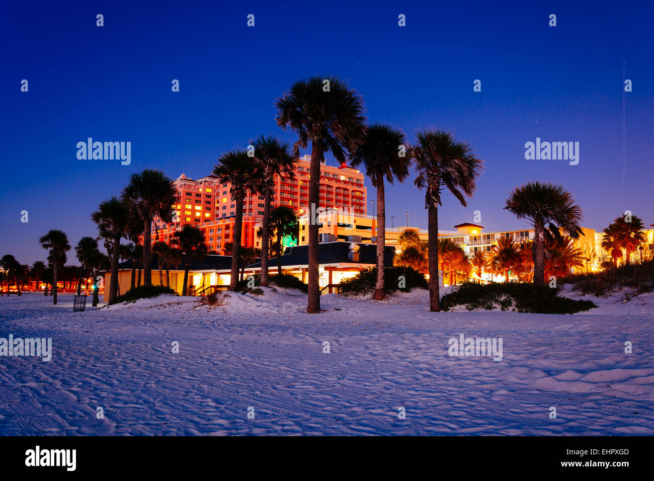 Palm Trees On The Beach At Night In Clearwater Florida