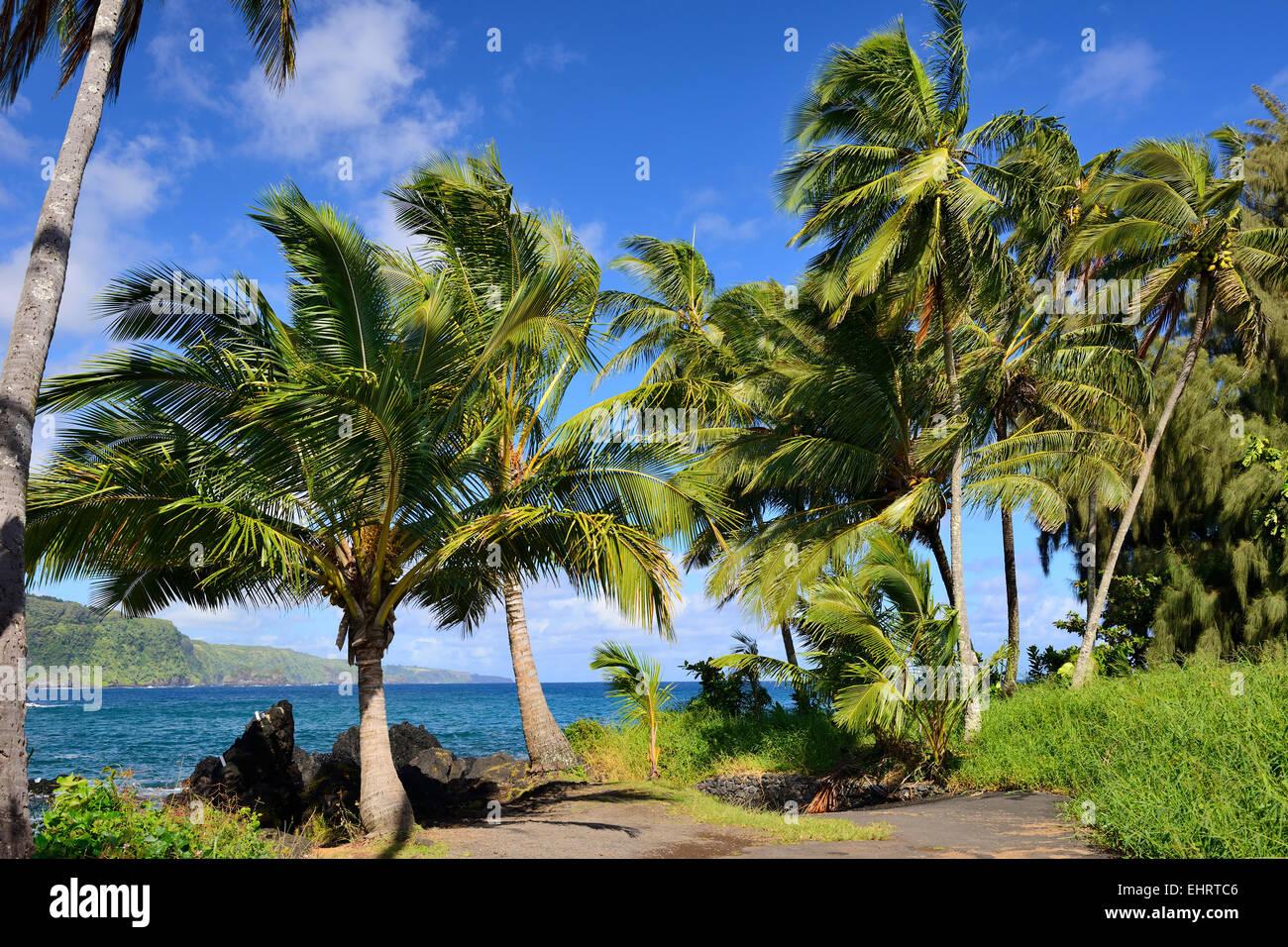 Maui 2017: Best of Maui Tourism - TripAdvisor
