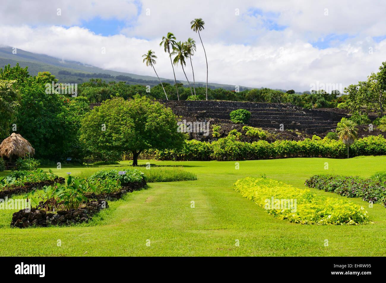 Pi 39 ilanihale heiau temple within kahanu garden national - National tropical botanical garden ...
