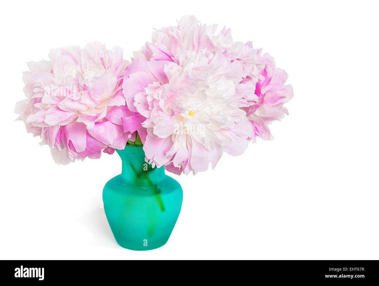 Pink peonies in a teal colored glass vase on white stock photo pink peonies in a teal colored glass vase on white reviewsmspy