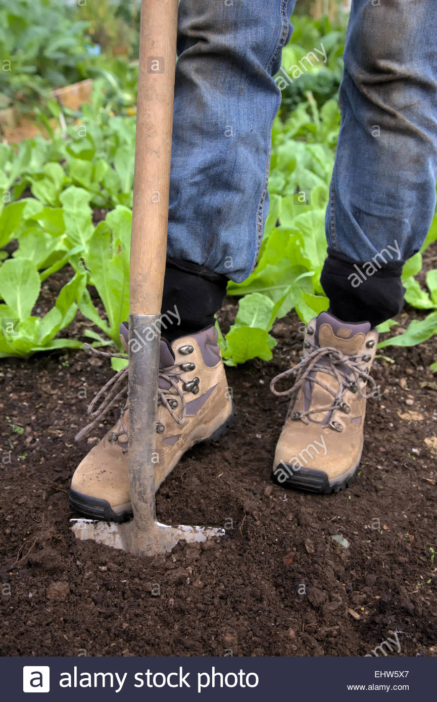 Woman Digging With Spade In Garden And Wearing Denim Jeans Tucked