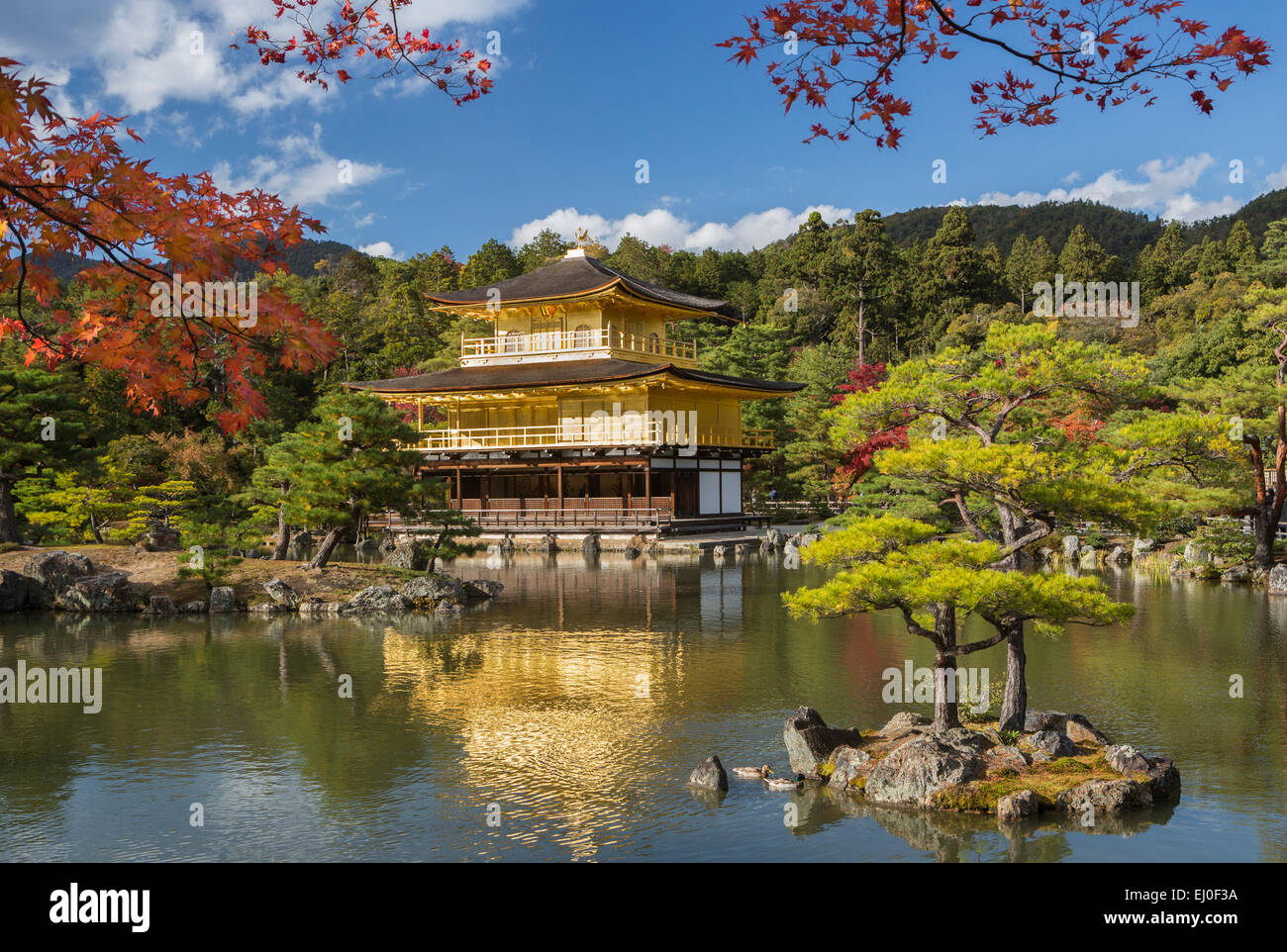 World Heritage, Japan, Asia, Kansai, Kinkaku Ji, Kyoto, Landscape, Temple,  Architecture, Colourful, Fall, Famous, Gold, Golden, M