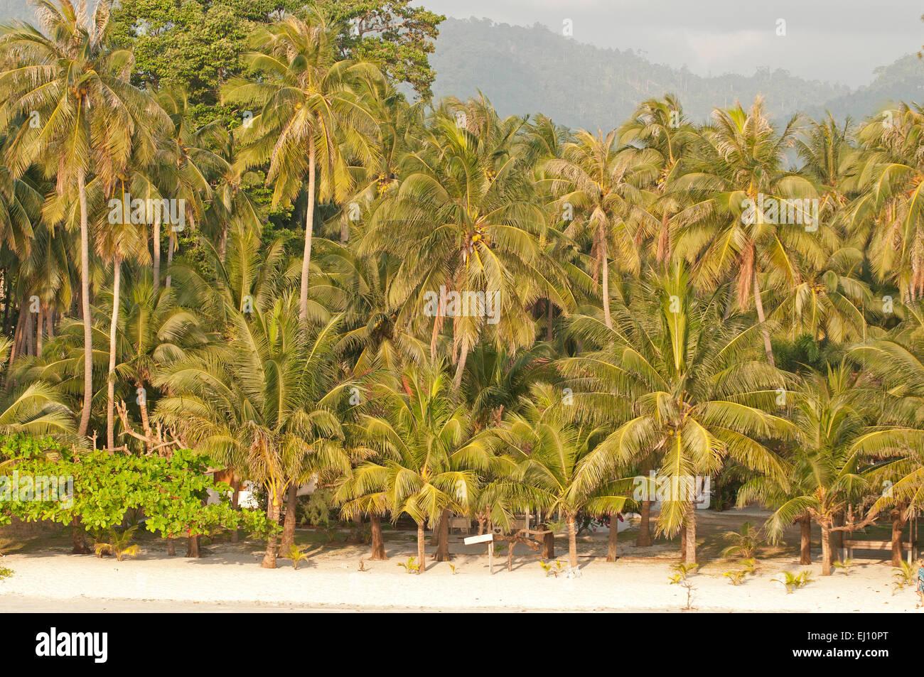 Landscape Beach Coconut Trees Koh Samui Thailand Tourism Palm