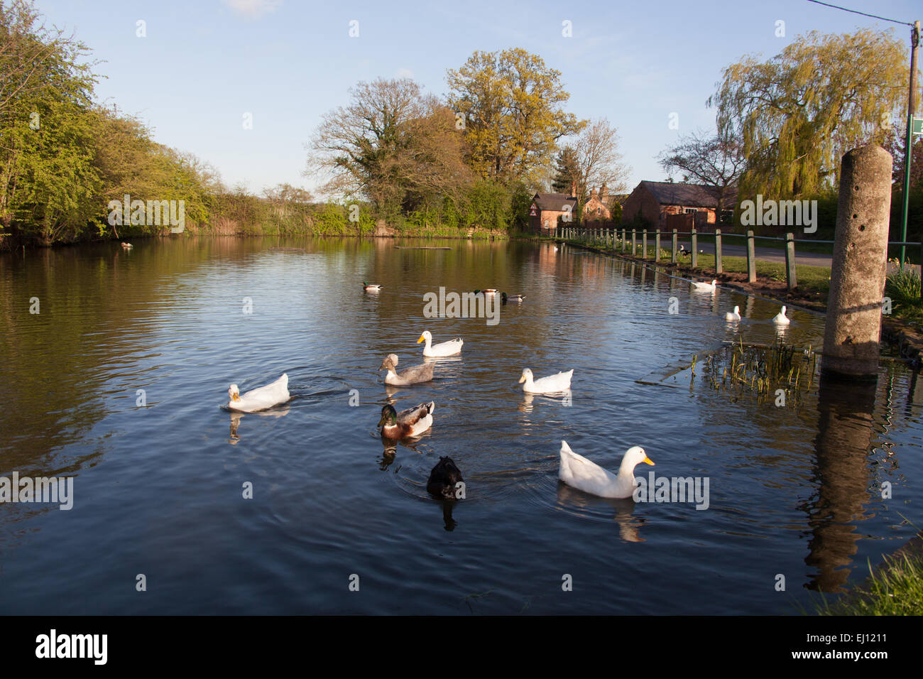 village of coddington cheshire england picturesque spring view