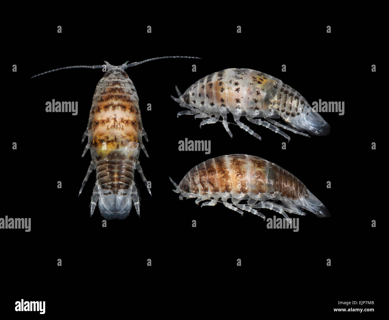 how to avoid sea lice