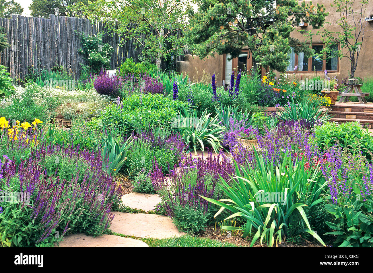 landscape architect and garden designer catherine clemens conceived and created this colorful and drought tolerant stock - Garden Design Drought Tolerant