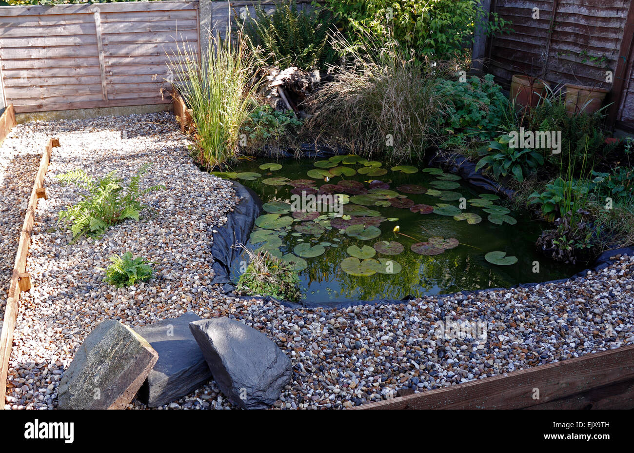 A Small Landscaped Garden Wildlife Pond Uk Stock Photo
