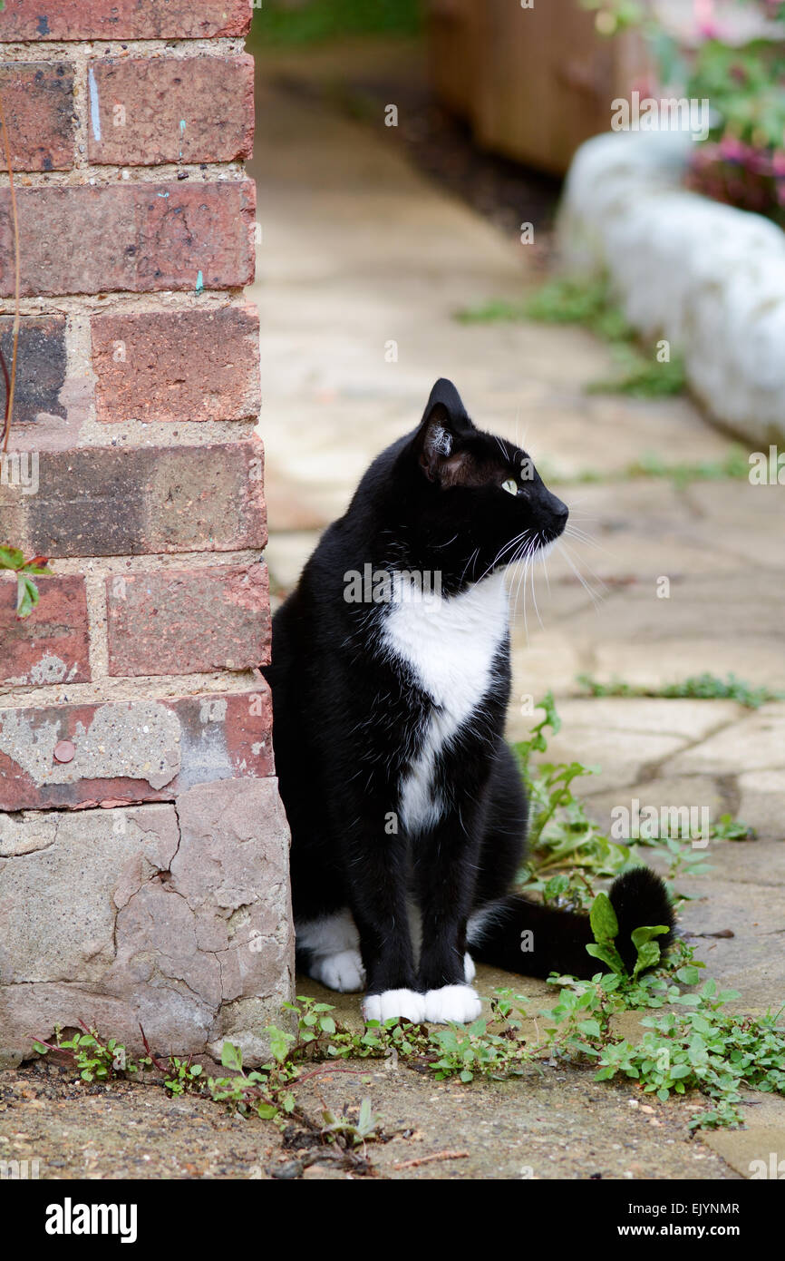 Black and white cat sat leaning against garden wall looking up at