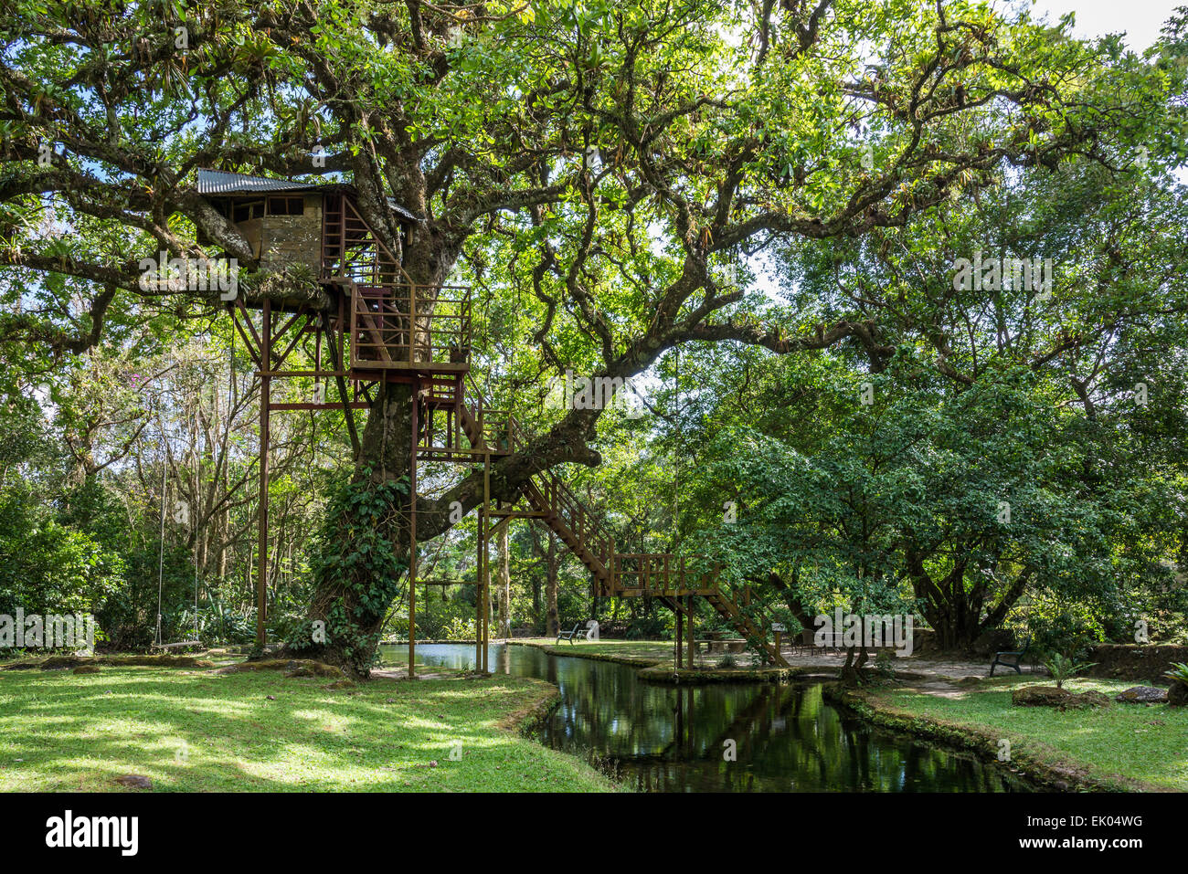 A tree-house under the canopy of a giant oak tree. Panama Central America & A tree-house under the canopy of a giant oak tree. Panama Central ...