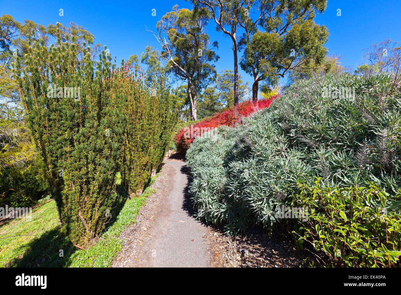 Mt Lofty Botanical Gardens Adelaide Hills South Australia Australian  Landscape Landscapes Autumn Tourist Attraction Attractions