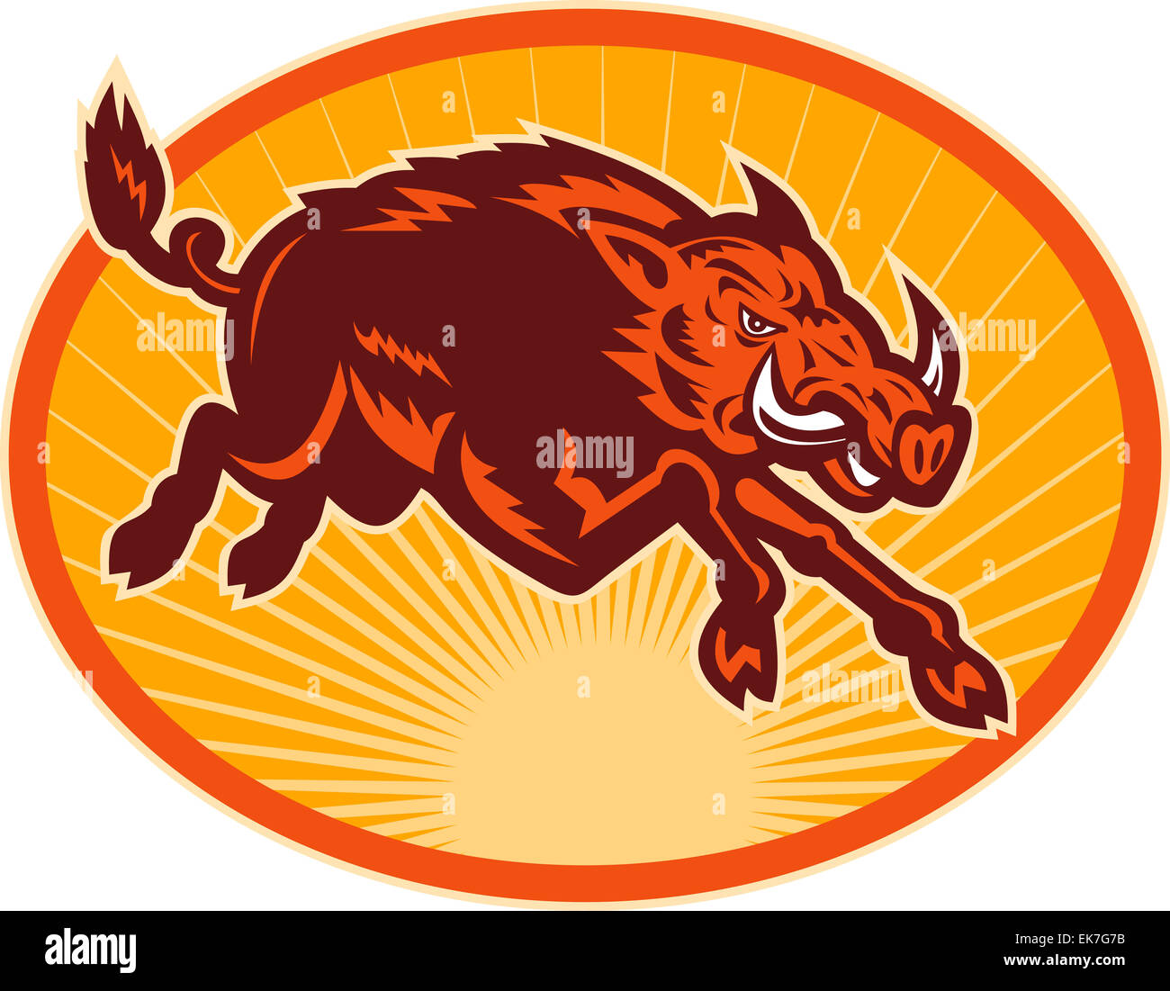 Charging attacking razorback wild boar or pig stock photo royalty charging attacking razorback wild boar or pig biocorpaavc