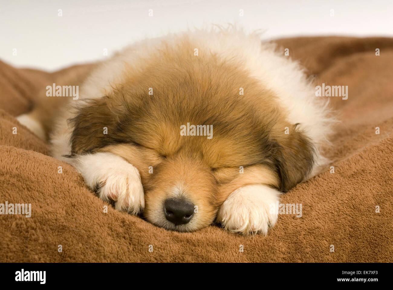 Dog Behaviour Sleeping On Yiur Bed
