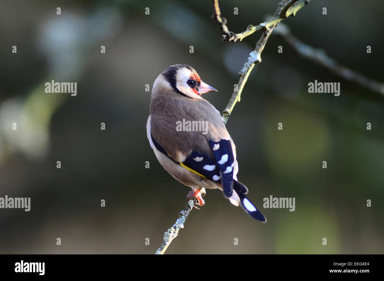 bird back garden uk stock photos u0026 bird back garden uk stock