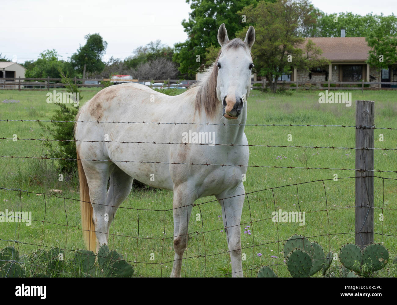 Delighted Wire Fence Pasture Photos - Electrical and Wiring Diagram ...