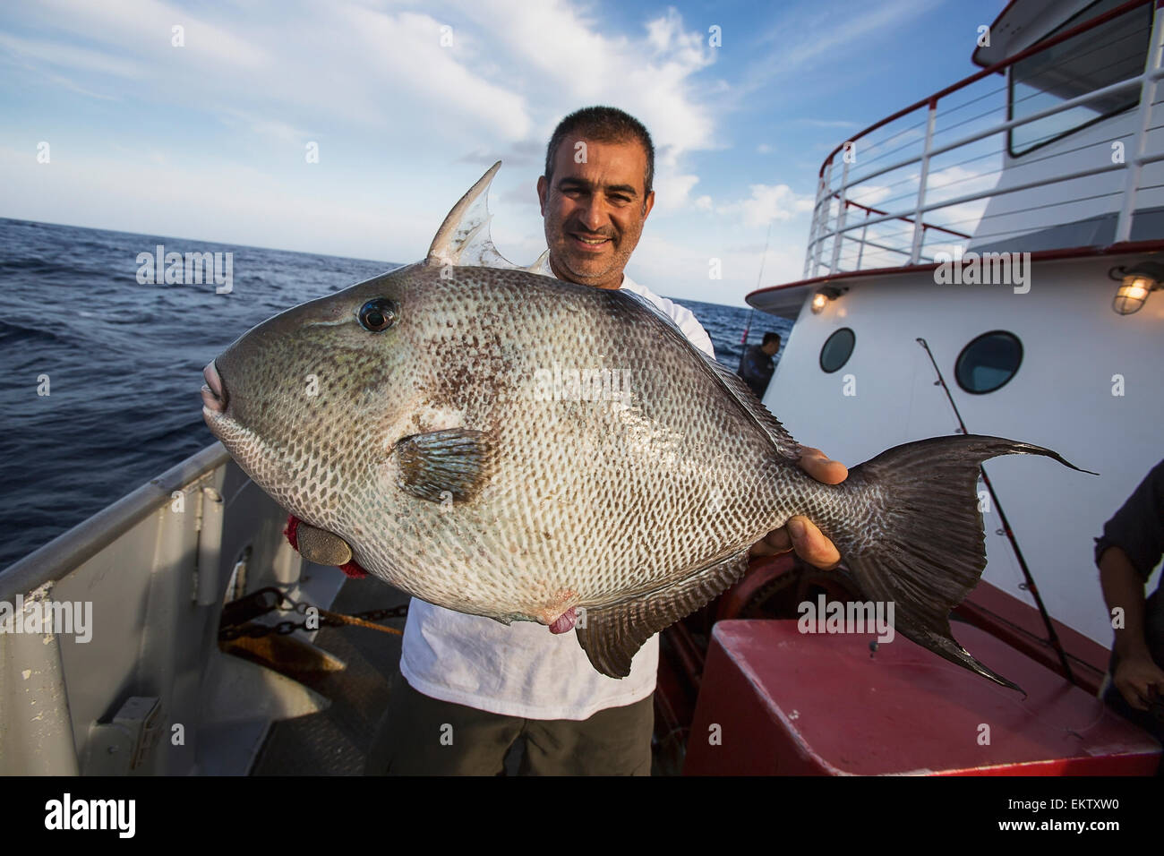 Man Holding Triggerfish Corpus Christi Texas Usa Stock