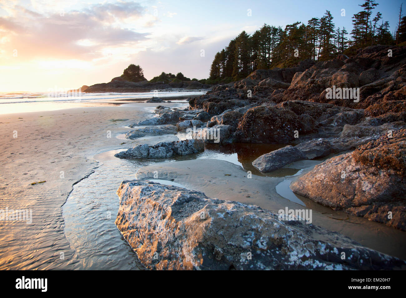 Cox bay and sunset point at low tide and at sunset near tofino cox bay and sunset point at low tide and at sunset near tofino british columbia canada nvjuhfo Image collections