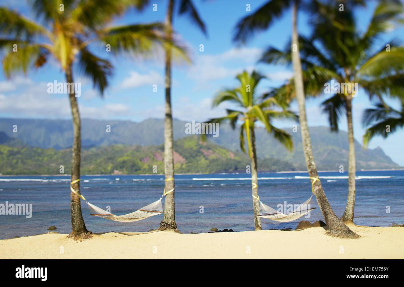 usa hawaii kauai two hammocks hanging between palm trees on sandy tropical beach  hanalei bay princeville usa hawaii kauai two hammocks hanging between palm trees on      rh   alamy