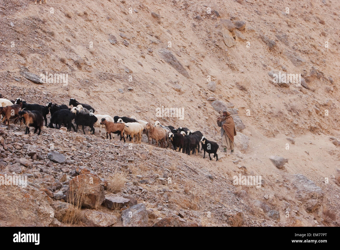 the relationship of shepherd and his flock