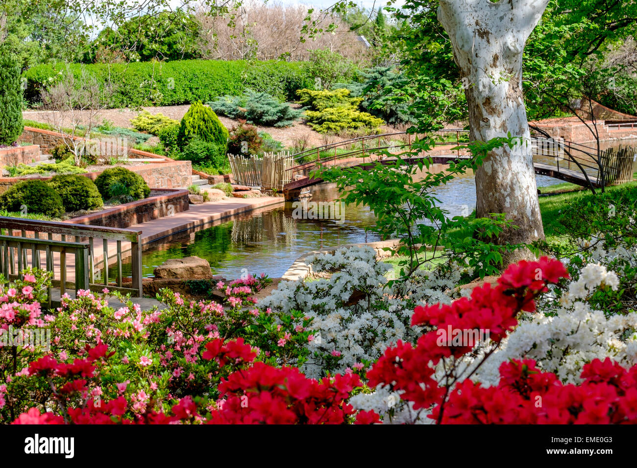 A Beautiful Scene With Blooming Azaleas In Will Rogers