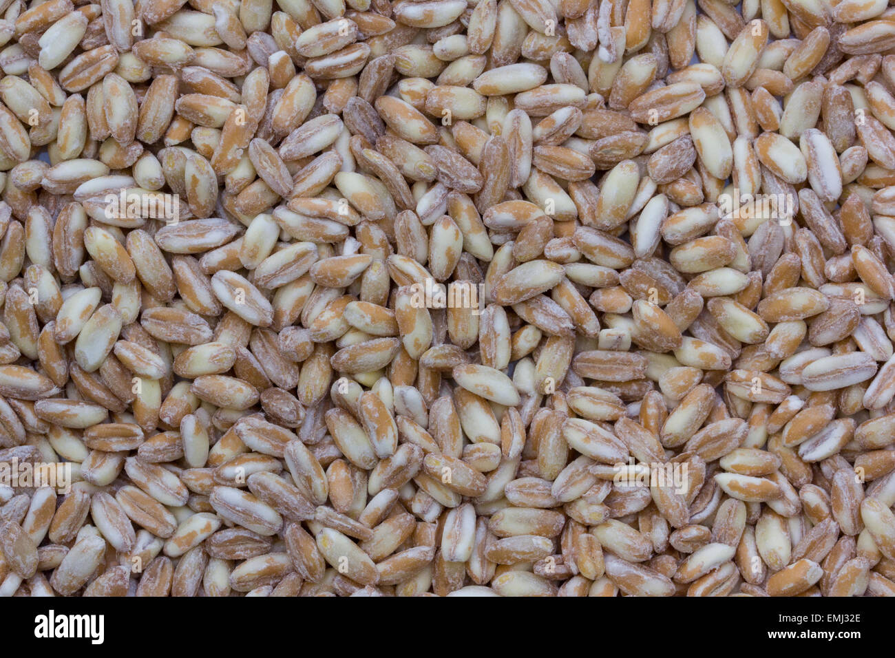 close up of pearl barley or pearled spelt stock photo