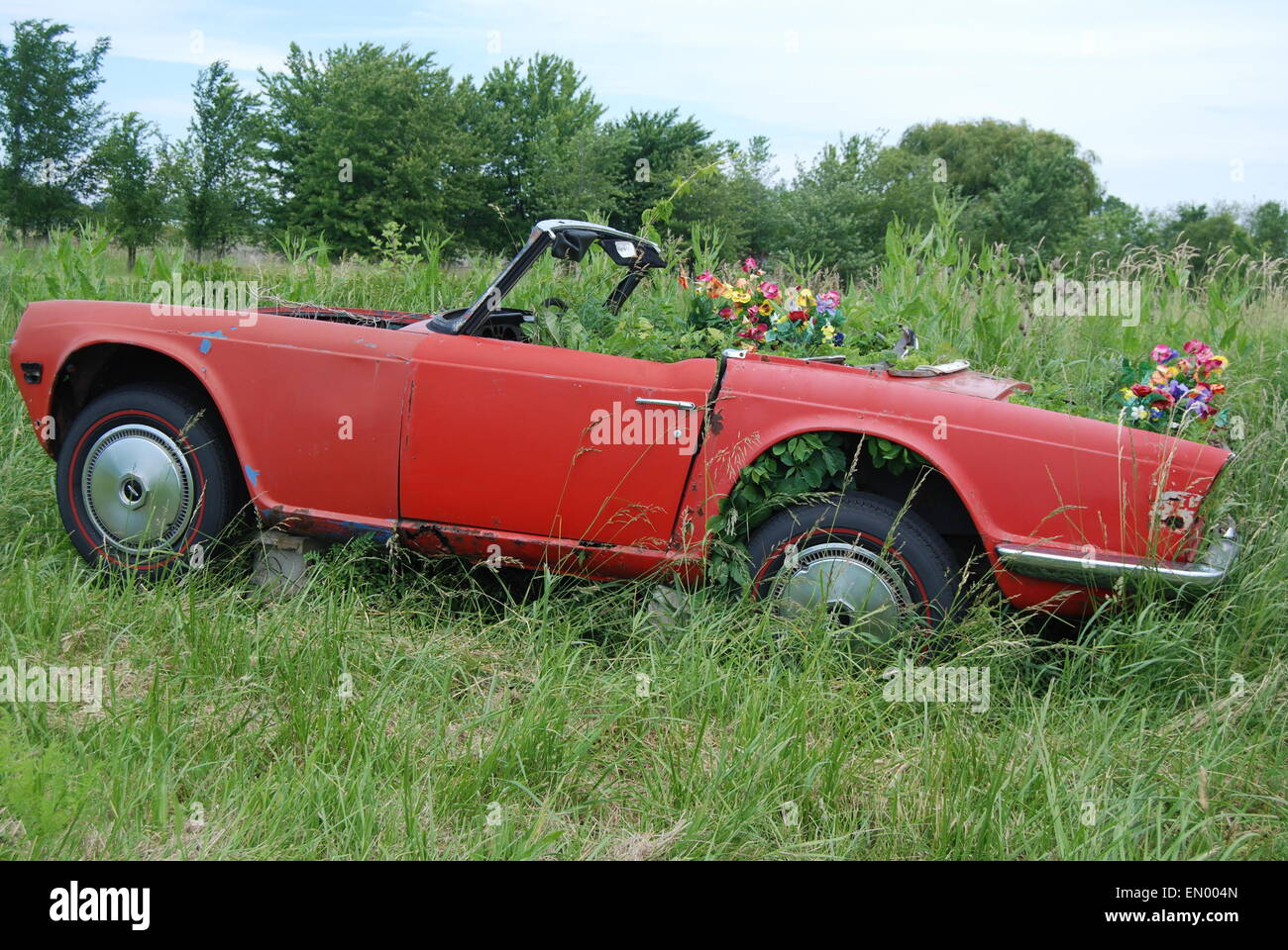 Old convertible car filled with planted petunias in rural field ...