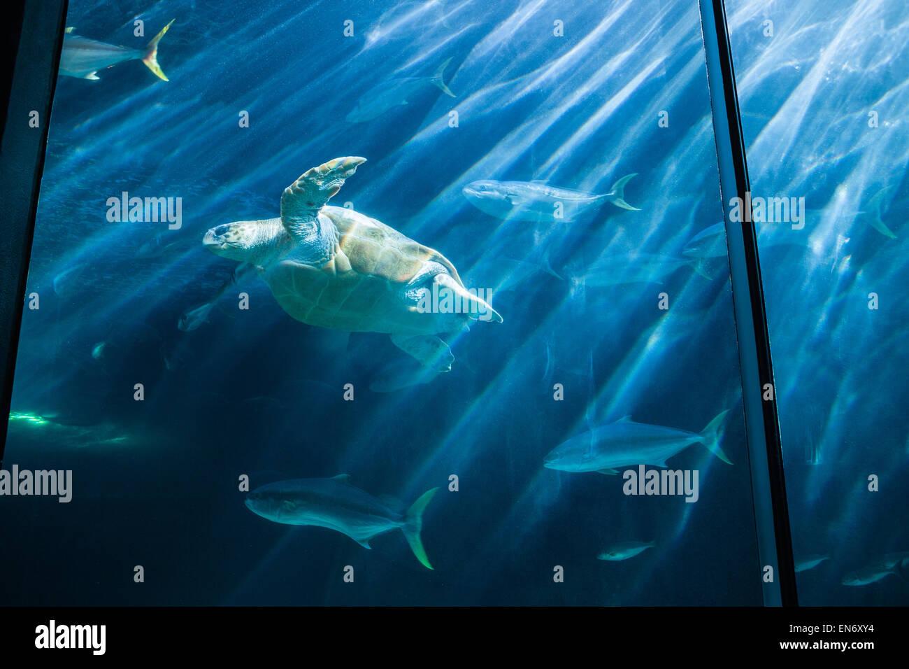 Fish in tank swimming - Stock Photo Turtle Swimming In Fish Tank