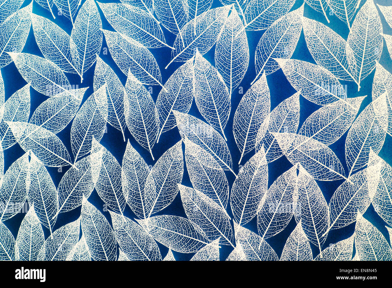Pattern of leaves on a frosted bathroom window mylar film cover screen. Pattern Of Leaves On A Frosted Bathroom Window Mylar Film Cover