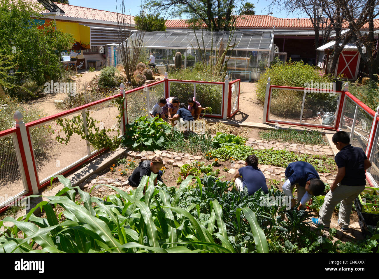 Captivating 29 April, 2015: Students Work In The School Garden At Manzo Elementary  School, Tucson, Arizona, USA. The School Was The First In TUSD To Be  Certified For ...